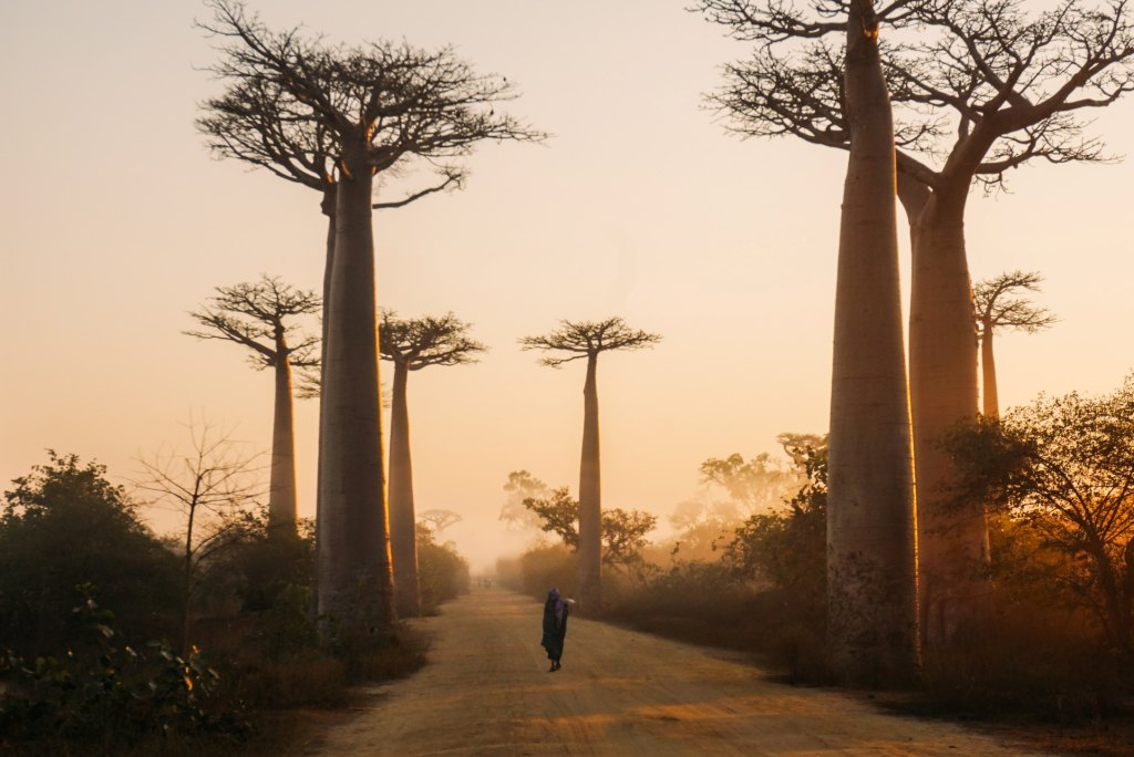 Travel to Madagascar at The best time to visit Madagascar